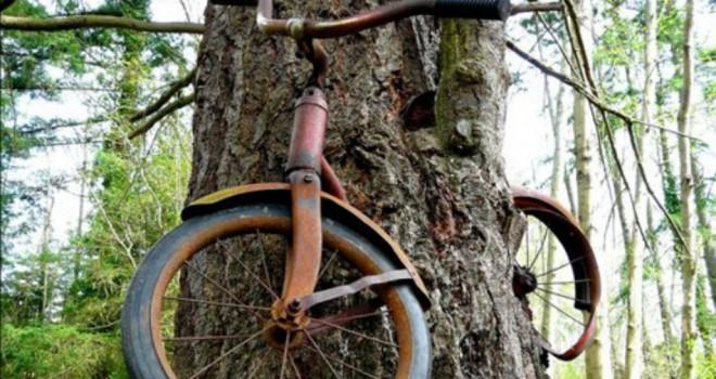 Bicihome bicicleta-arbol